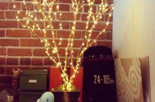 درختچه نوری